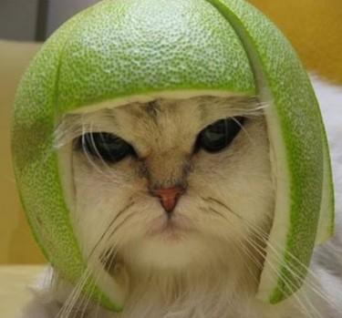 Cat Lady 4