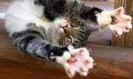 Cat Lady 5