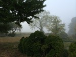 A misty morning on the farm...